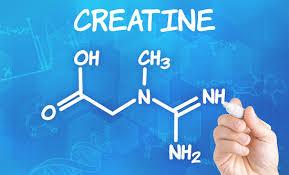 фармакология креатина