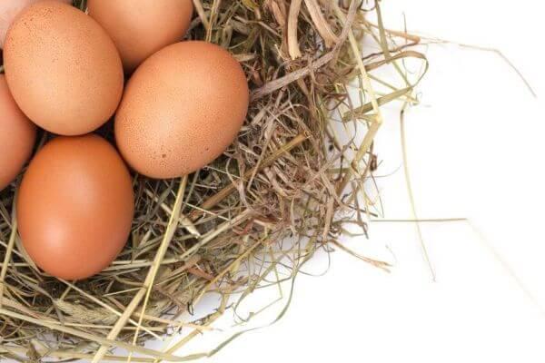 спортивное питание-яичный порошок