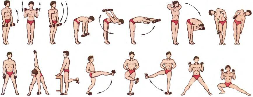 программа тренировок с гантелями