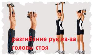 эффективный набор массы разгибание стоя
