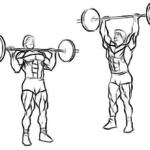 Армейский жим — упражнение для мышц плечевого пояса