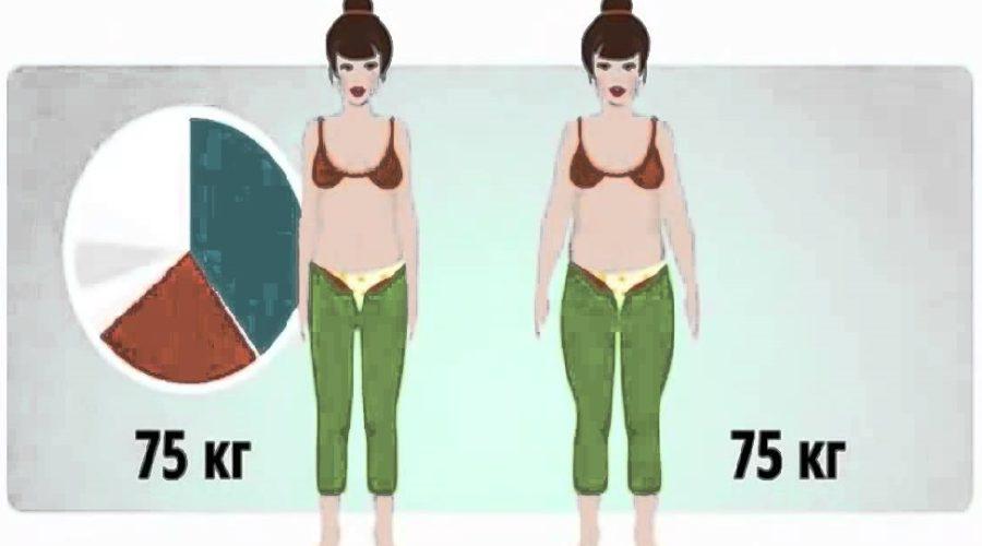 Процент жира в организме - как определить и зачем
