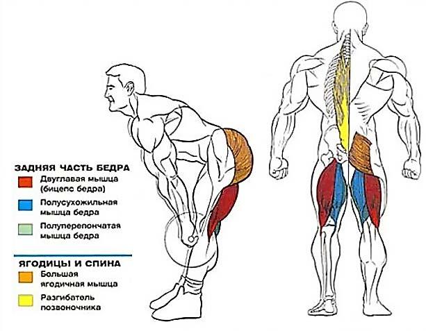 румынская становая со штангой - мышечные группы