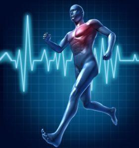 кардиотренировки ускоряют похудение и сжигают жировые отложения