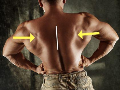шраги с гантелями и штангой - сведение спины