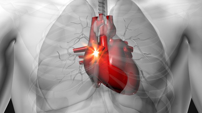 clenbuterol влияние на сердце