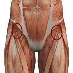 мышцы-сгибатели бедра