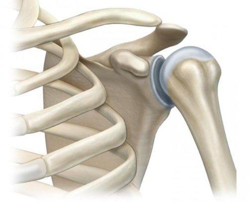 вращательная (ротаторная) манжета плеча - гленогумеральный сустав
