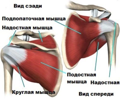 вращательная (ротаторная) манжета плеча - травматизм