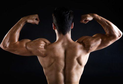 вращательная (ротаторная) манжета плеча - вид сзади