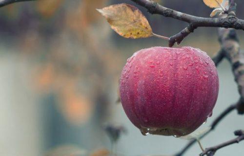 яблоки - польза для организма