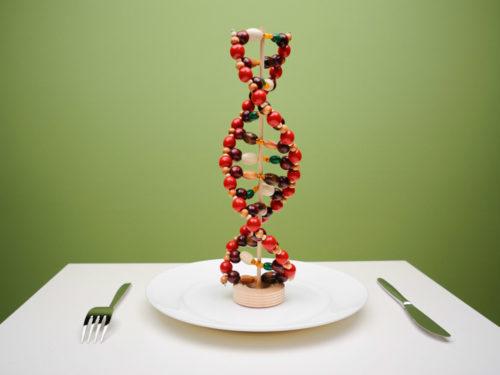 уровень оптимальной массы - сет поинт и генетика