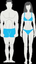 тип телосложения мезоморф