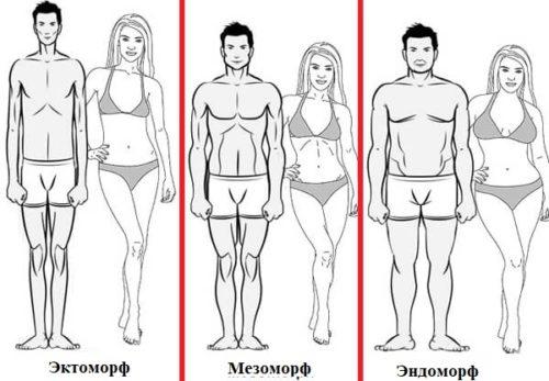 типы телосложений - эктоморф, эндоморф, мезоморф