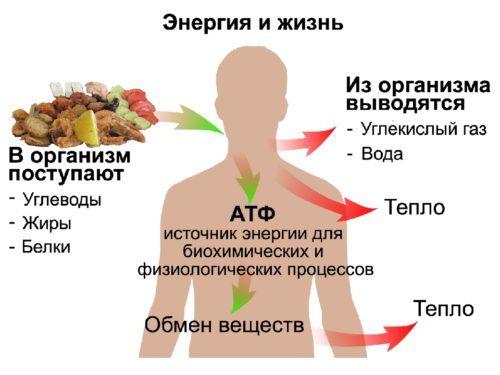 сушка тела - изменение метаболизма в организме