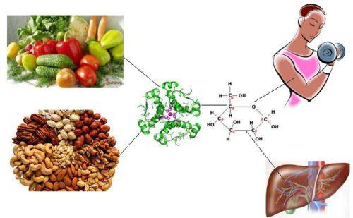 гликоген и аминокислоты - изменение в течение дня