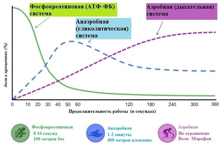 энергетические системы организма