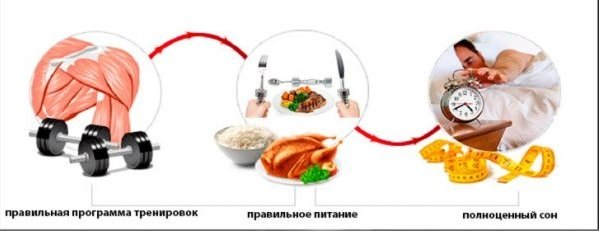 условия для роста мышц - питание