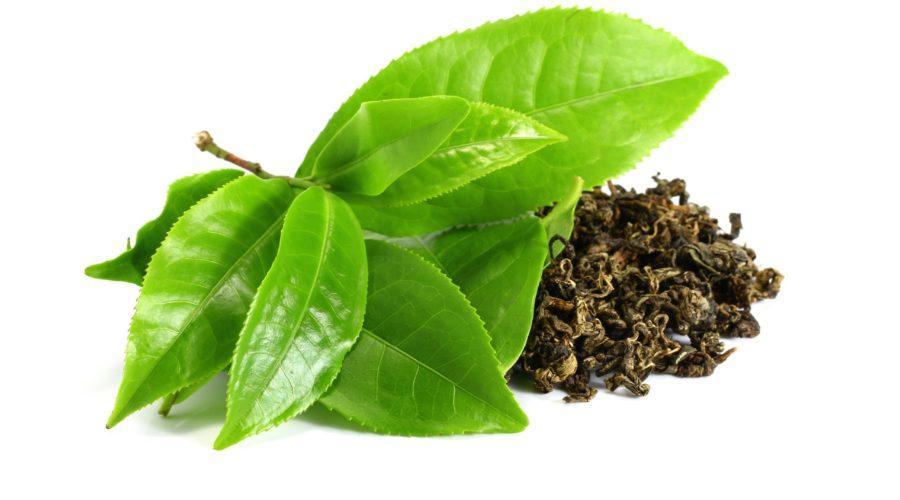 Экстракт зеленого чая для укрепления здоровья и сжигания жира