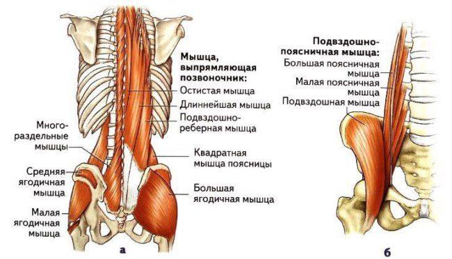 тренировка спины - поясница