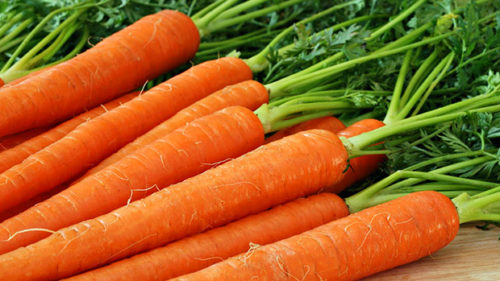 профилактика болезни - ешьте морковь