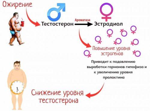 ксеноэстроген - влияние на организм